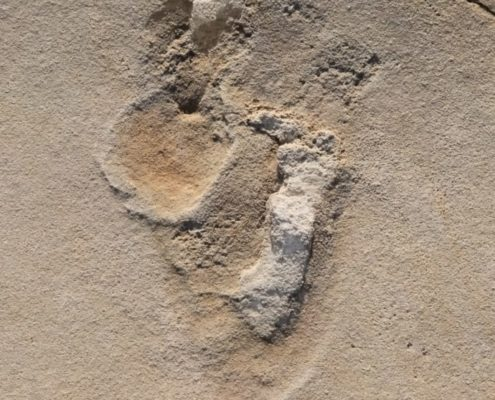 Footprints from Crepe