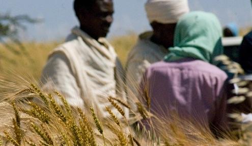 Farmers biodiversity role